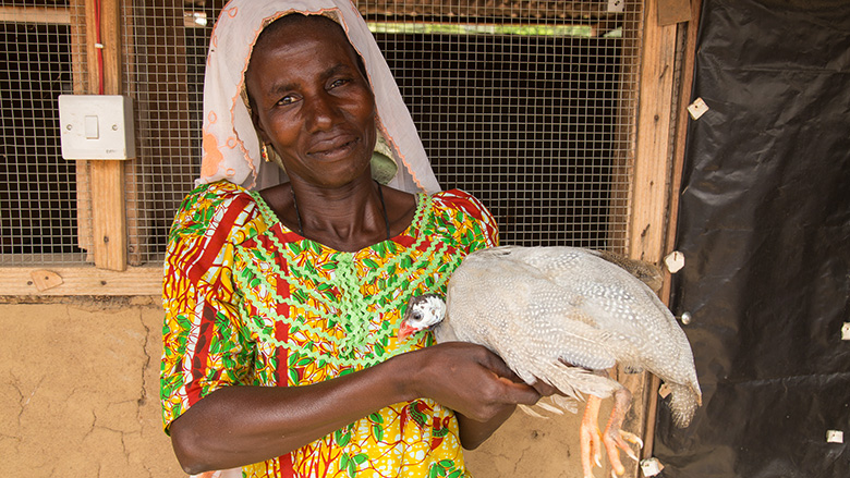 Guinea Fowl Farming Could Hatch Jobs in Ghana