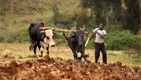 Growing Africa's Food Markets
