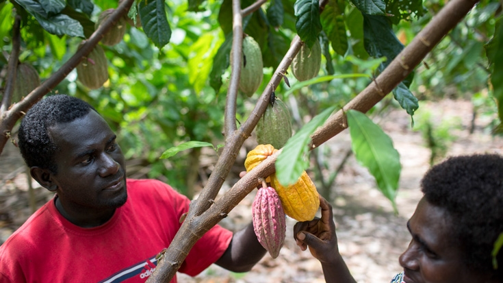 &#80&#97&#112&#117&#97&#32&#78&#101&#119&#32&#71&#117&#105&#110&#101&#97&#58&#32&#82&#101&#115&#116&#111&#114&#105&#110&#103&#32&#116&#104&#101&#32&#8216&#83&#116&#114&#101&#97&#109&#32&#111&#102&#32&#67&#111&#99&#111&#97&#8217&#32&#116&#111&#32&#66&#111&#117&#103&#97&#105&#110&#118&#105&#108&#108&#101