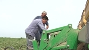 Video: Development of Agribusiness in the Kyrgyz Republic