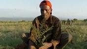 A farmer in the Humbo region of Ethiopia.
