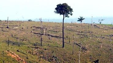 Global Warming and deforestation of the amazon?