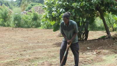 A brighter future for Caribbean farmers