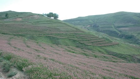 China: Restoring Grasslands and Improving...
