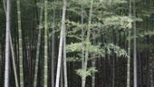Reforestation in China
