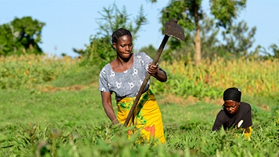 &#87&#111&#109&#101&#110&#8217&#115&#32&#69&#109&#112&#111&#119&#101&#114&#109&#101&#110&#116&#32&#105&#110&#32&#65&#99&#116&#105&#111&#110&#32&#64&#32&#67&#73&#65&#84&#32&#73&#110&#116&#101&#114&#110&#97&#116&#105&#111&#110&#97&#108&#32&#67&#101&#110&#116&#101&#114&#32&#102&#111&#114&#32&#84&#114&#111&#112&#105&#99&#97&#108&#32&#65&#103&#114&#105&#99&#117&#108&#116&#117&#114&#101&#32&#47&#32&#70&#108&#105&#99&#107&#114