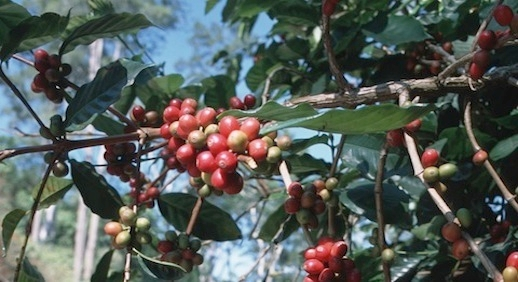 https://agrifinfacility.org/event/webinar-financing-coffee-growers-lessons-from-banking-partnership-in-Honduras