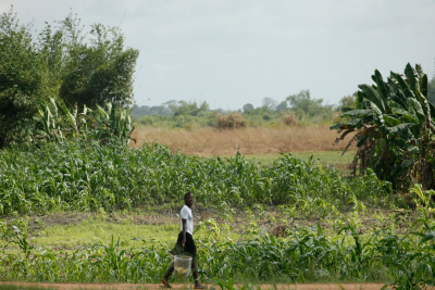 &#65&#32&#103&#105&#114&#108&#32&#119&#97&#108&#107&#115&#32&#112&#97&#115&#116&#32&#97&#32&#102&#105&#101&#108&#100&#32&#105&#110&#32&#77&#111&#110&#114&#111&#118&#105&#97&#44&#32&#76&#105&#98&#101&#114&#105&#97&#46