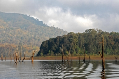 &#80&#101&#114&#105&#121&#97&#114&#32&#84&#105&#103&#101&#114&#32&#82&#101&#115&#101&#114&#118&#101&#32&#40&#80&#104&#111&#116&#111&#58&#32&#87&#111&#114&#108&#100&#32&#66&#97&#110&#107&#41