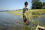 A farmer walks through a flooded rice field. - Photo: Nonie Reyes/World Bank