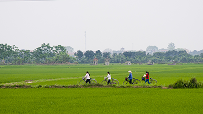 Women ride through a rice field. - Photo: Shutterstock