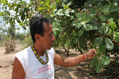 &#69&#100&#105&#118&#97&#108&#100&#111&#32&#65&#112&#105&#110&#97&#106&#101&#44&#32&#97&#32&#104&#101&#97&#108&#116&#104&#32&#97&#103&#101&#110&#116&#32&#102&#114&#111&#109&#32&#116&#104&#101&#32&#65&#112&#105&#110&#97&#106&#101&#32&#116&#114&#105&#98&#101&#32&#105&#110&#32&#84&#111&#99&#97&#110&#116&#105&#110&#115&#44&#32&#115&#104&#111&#119&#115&#32&#97&#32&#99&#97&#115&#104&#101&#119&#32&#102&#114&#117&#105&#116&#32&#115&#112&#114&#111&#117&#116&#105&#110&#103&#32&#111&#110&#32&#97&#32&#116&#114&#101&#101&#32&#98&#114&#97&#110&#99&#104&#46&#32&#77&#97&#114&#105&#97&#110&#97&#32&#75&#97&#105&#112&#112&#101&#114&#32&#67&#101&#114&#97&#116&#116&#105&#47&#87&#111&#114&#108&#100&#32&#66&#97&#110&#107