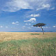 Kenya landscape. Curt Carnemark/World Bank