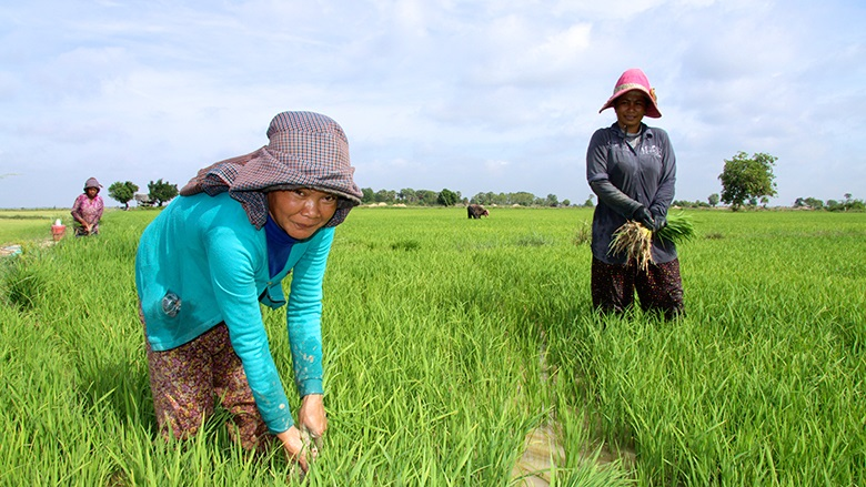 Cambodian Agriculture in Transition: Opportunities and Risks