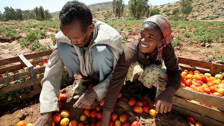 &#70&#97&#114&#109&#101&#114&#115&#32&#115&#111&#114&#116&#115&#32&#116&#111&#109&#97&#116&#111&#101&#115&#32&#105&#110&#32&#69&#116&#104&#105&#111&#112&#105&#97&#46&#32&#169&#32&#83&#116&#101&#112&#104&#97&#110&#32&#66&#97&#99&#104&#101&#110&#104&#101&#105&#109&#101&#114&#47&#87&#111&#114&#108&#100&#32&#66&#97&#110&#107