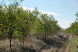More Trees for Moldova