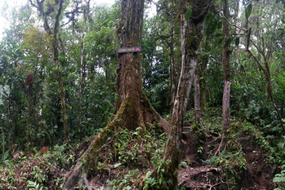 &#102&#111&#114&#101&#115&#116&#32&#105&#110&#32&#67&#111&#115&#116&#97&#32&#82&#105&#99&#97