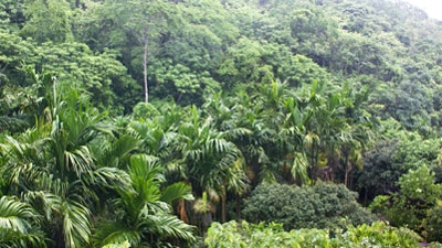 &#65&#32&#116&#114&#111&#112&#105&#99&#97&#108&#32&#102&#111&#114&#101&#115&#116&#32&#105&#110&#32&#66&#101&#108&#105&#122&#101
