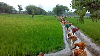 Image result for Bangladesh rural