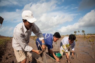 &#80&#108&#97&#110&#116&#105&#110&#103&#32&#109&#97&#110&#103&#114&#111&#118&#101&#115&#32&#105&#110&#32&#116&#104&#101&#32&#77&#101&#107&#111&#110&#103&#32&#68&#101&#108&#116&#97