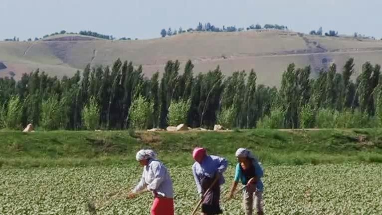 Kyrgyz Women Working Together to Grow Vegetables and Profits