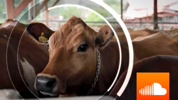 PODCAST: Happy Cows Help Save the Planet