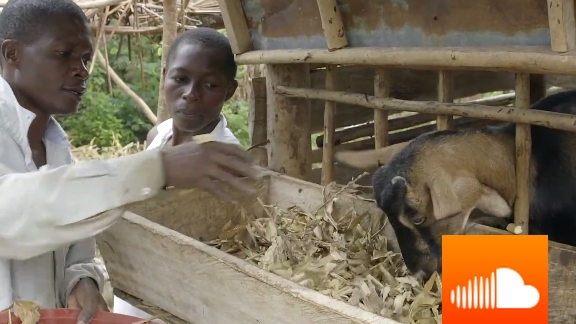 PODCAST: Take On: Pawpaw and Goats - Surprising Ways to Combat Climate Change in Kenya