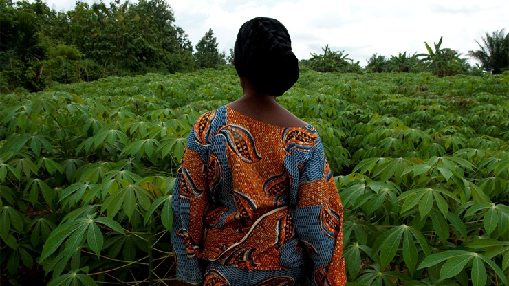 Agriculture Development in West Africa: Improving
