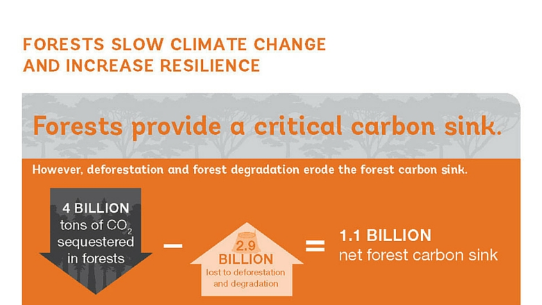 Forests Slow Climate Change and Increase Resilience