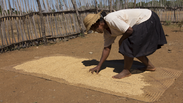 In the Face of Red Sand, a Struggle to Grow Rice in Madagascar