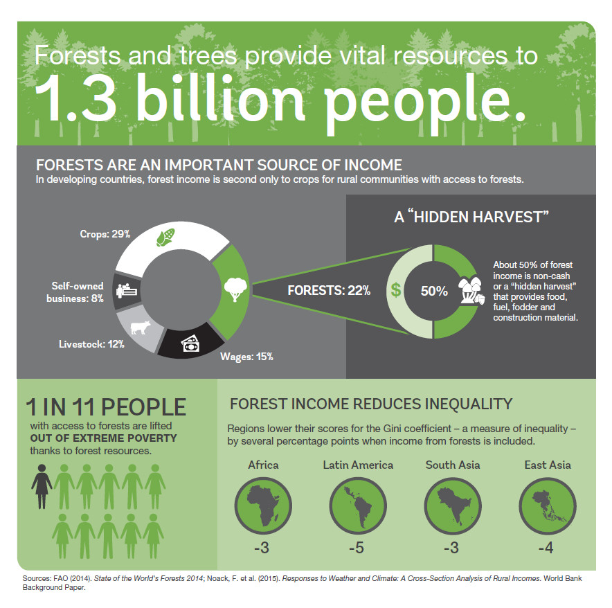 Forests Provide Vital Resources to 1.3B people