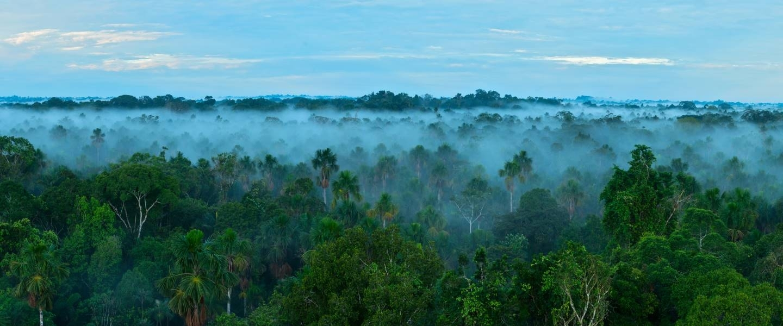 Amazon Sustainable Landscapes Program