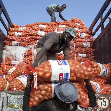 Unloading onions in Mali