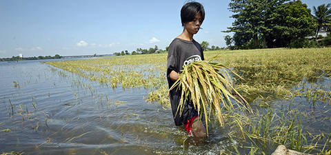 Man walking through a flooded rice field. © Nonie Reyes/World Bank