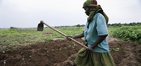 Woman cultivating crops in Tanzania. © Scott Wallace/World Bank