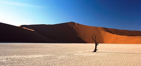 Dead tree in dry salt flat in Namibia. © William Llewelyn Davies/IFC
