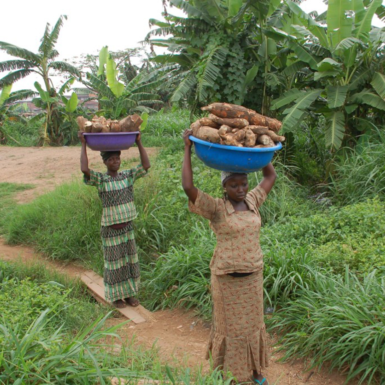 To combat poverty, the Commercial Agriculture Development Project for Nigeria involves beneficiaries as key players and partners.