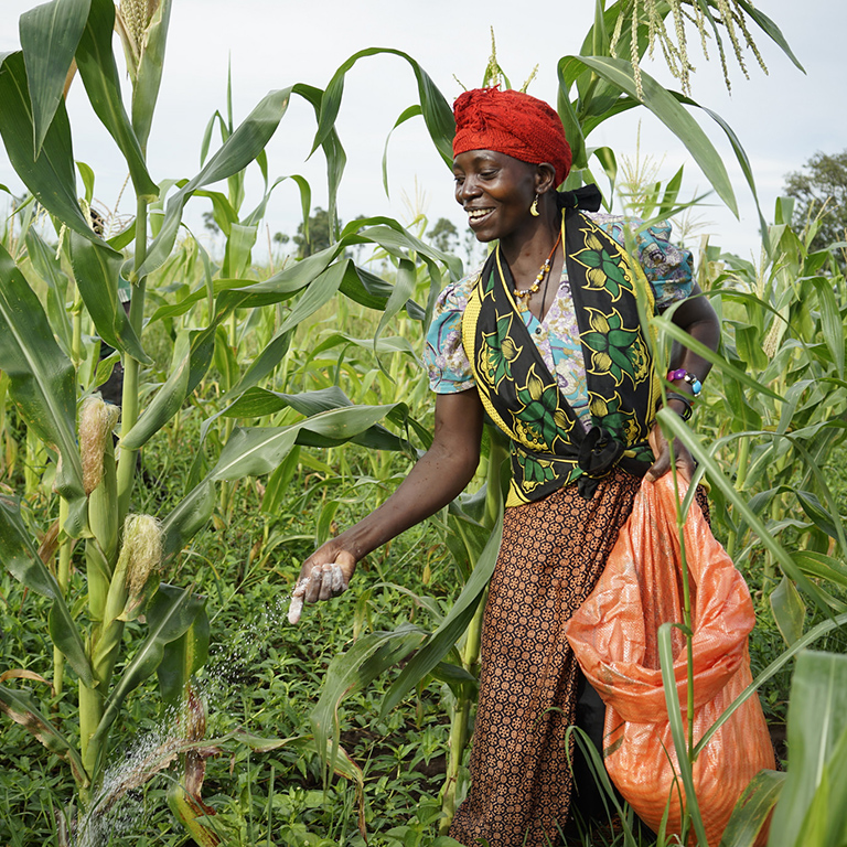 Fertilizer use is one way to boost crop-yields & farm incomes. Why is it still so limited in low-income countries?