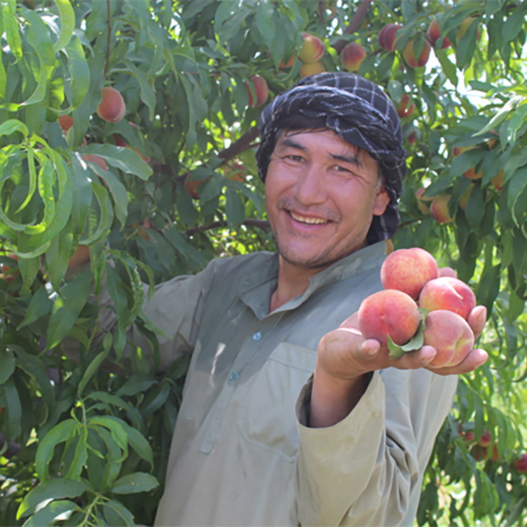 Afghanistan's National Horticulture and Livestock Project (NHLP) is working to improve agriculture through better productivity and quality.