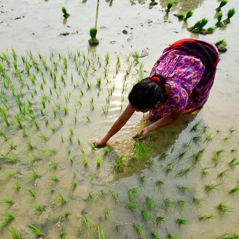 Climate-smart agriculture profiles for Bhutan, Pakistan and Nepal provide an important step forward in creating a sustainable food system in South Asia.
