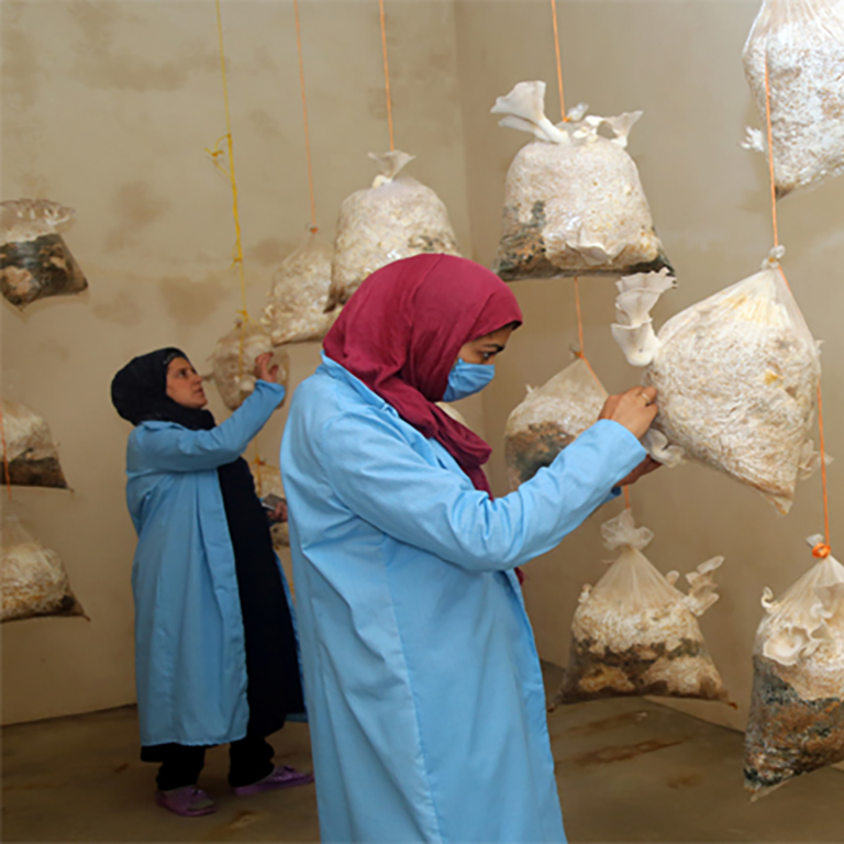 Zakia, a resident of Ulmarab village in Afghanistan, grows mushrooms and is the only self-employed woman in her village. Photo: Rumi Consultancy/ World Bank