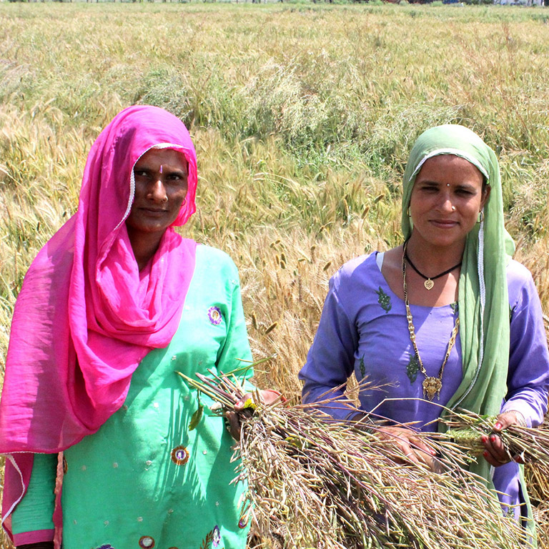 Over 500,000 farming households are expected to benefit from a new agribusiness project in India.
