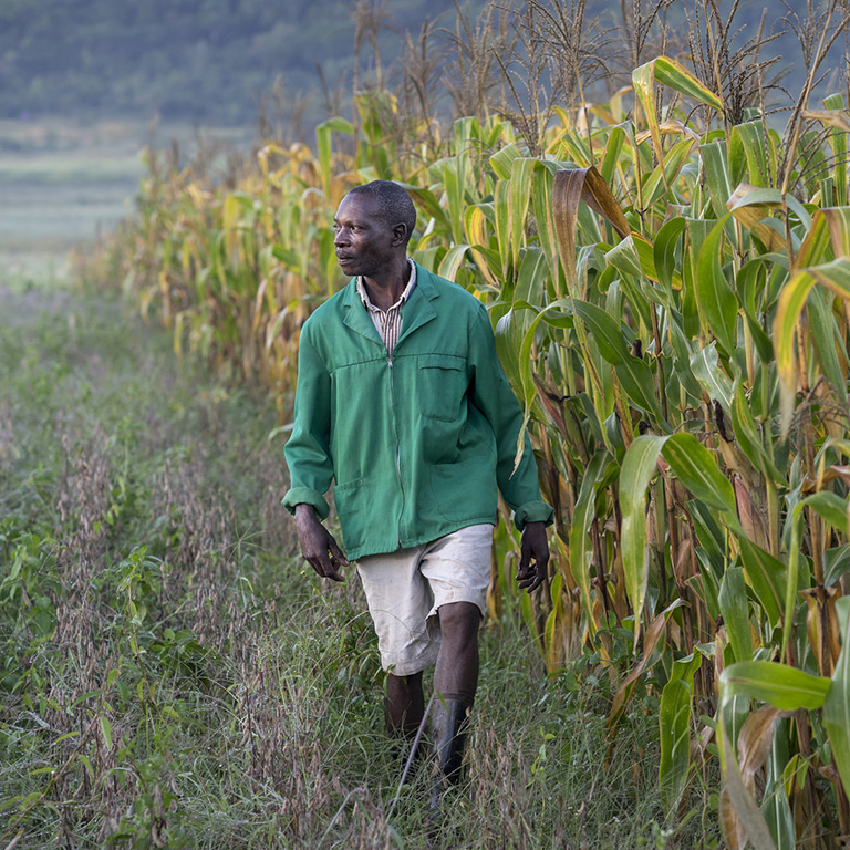 The Agricultural Observatory offers a way to place the power of data and analytics in the hands of smallholder farmers. Photo: CIMMYT