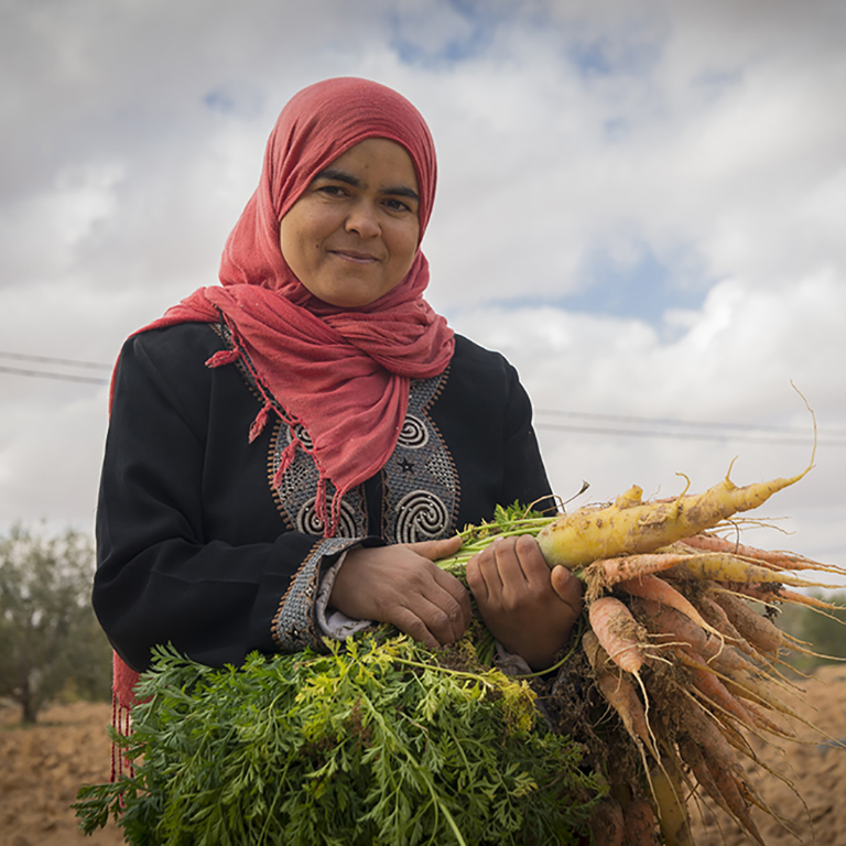A new project in Tunisia will upgrade and repair irrigation systems to help create a more productive agriculture sector.