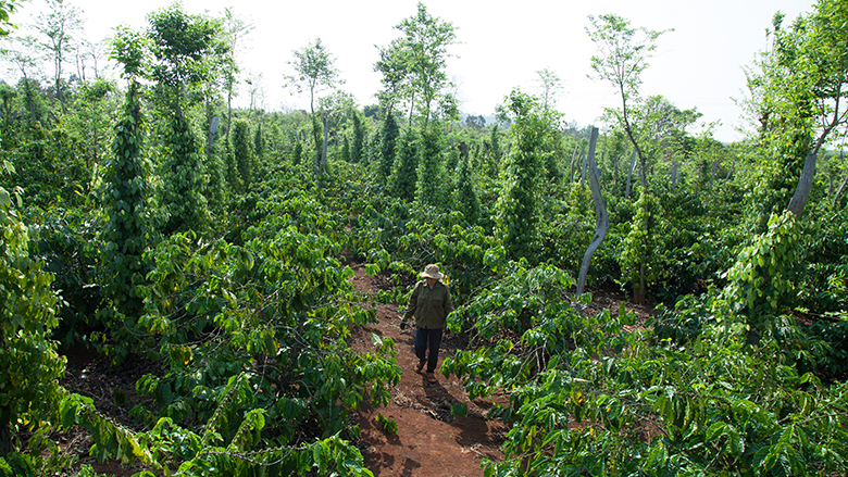 Vietnam: Sustainable Farming Increases Productivity and Improves the