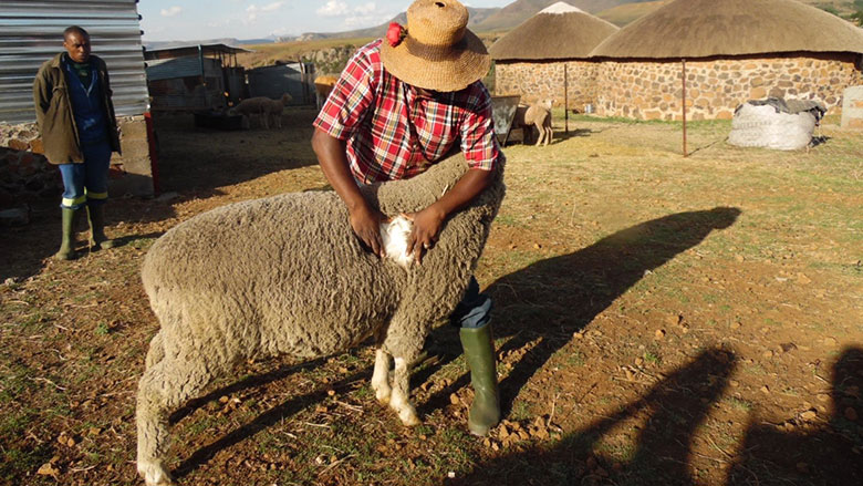 Agriculture Project Helps Lesotho S Smallholder Farmers