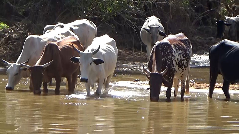 How a Water Reservoir Ended Long-Standing Conflict Between Farmers and Livestock Herders in Sudan