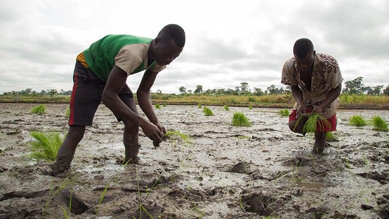 Growing More Food: West African Agriculture Shows the Way