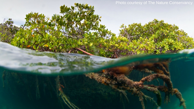 Cuba_Garden of the Queen_Mangroves_Photo by Nature Conservancy