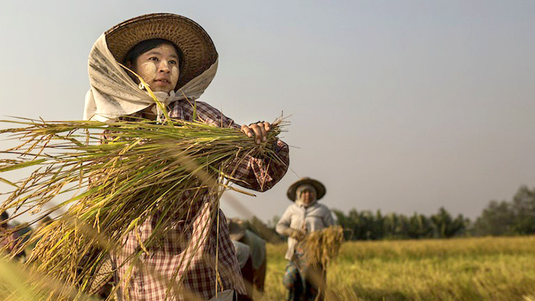 Crop Diversification Helps Increase Farm Profits in Myanmar